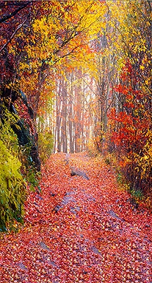 Colorful Autumn (Photo Backdrop)
