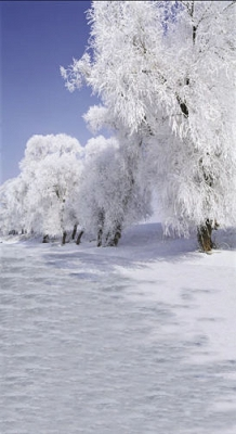 Snow Covered Trees (Photo Backdrop)